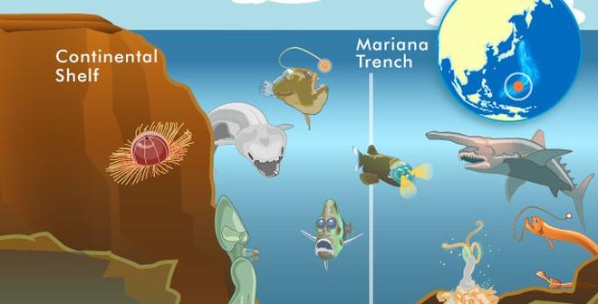 """Những """"quái vật biển"""" thống lĩnh vùng biển sâu nhất hành tinh"""