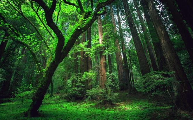 Bí mật chết chóc ở thế giới ngầm đáng sợ nhất rừng già Amazon - Ảnh 1.
