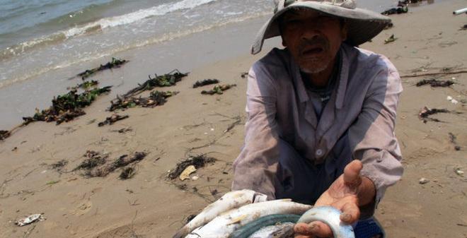 Chuyên gia nói gì sau khi xác định nguyên nhân cá chết?