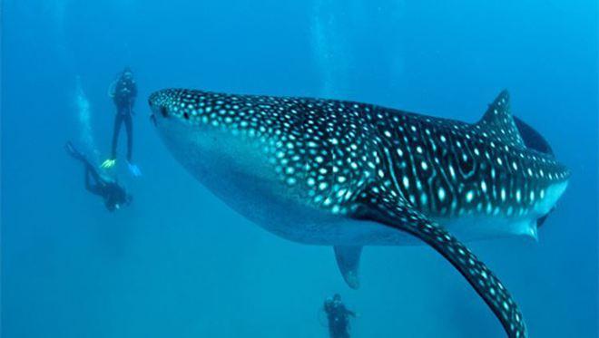 Chưa biết cá mập ở Quảng Ninh là thật hay giả, nhưng đây là những loài kỳ dị nhất! - Ảnh 2.