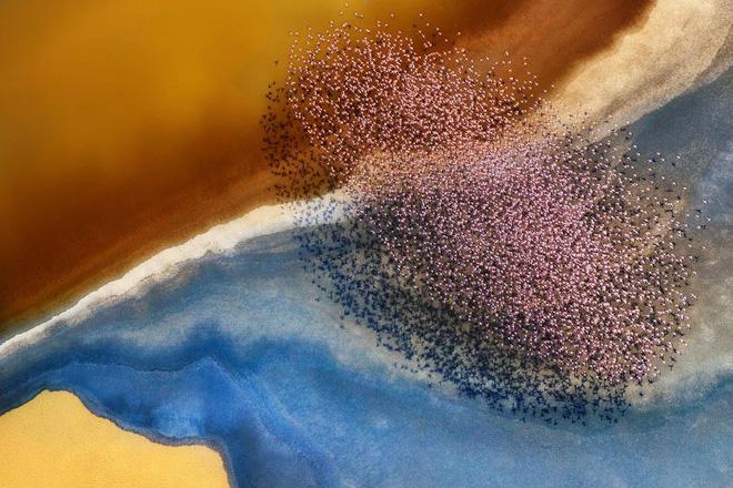 Bộ ảnh tuyệt vời của National Geographic: Khi thế giới hoang dã hóa mình thành kiệt tác - Ảnh 3.