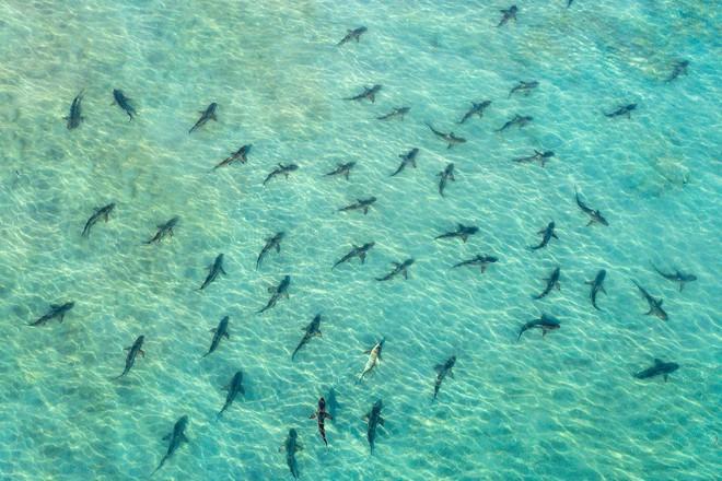 Bộ ảnh tuyệt vời của National Geographic: Khi thế giới hoang dã hóa mình thành kiệt tác - Ảnh 6.