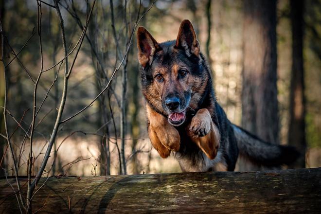 Cứu dê khỏi miệng sói, chó vạch mặt đám bạn chỉ biết khua môi múa mép: Ai cũng nên ngẫm! - Ảnh 3.