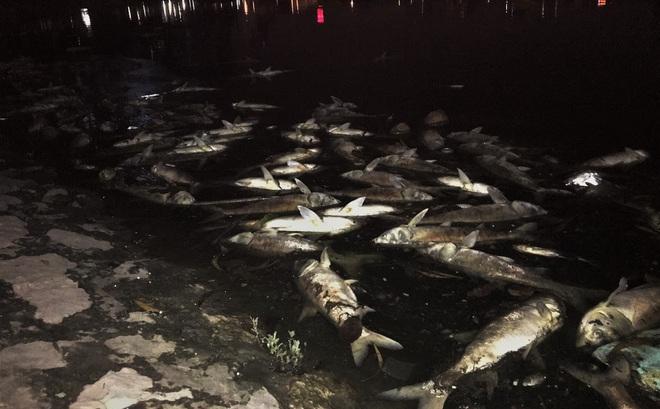 Trắng đêm thu dọn cá chết tại hồ Hoàng Cầu, Hà Nội
