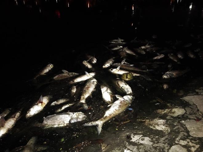 Trắng đêm thu dọn cá chết tại hồ Hoàng Cầu, Hà Nội - Ảnh 2.
