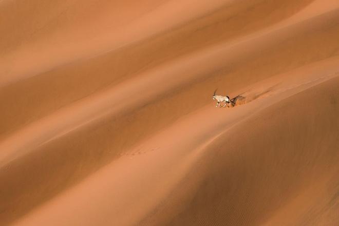Bộ ảnh tuyệt vời của National Geographic: Khi thế giới hoang dã hóa mình thành kiệt tác - Ảnh 14.