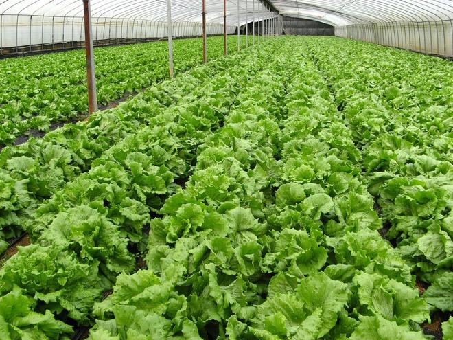 81,6 tỉ USD và những con số ấn tượng về nền nông nghiệp hữu cơ trên thế giới - Ảnh 3.