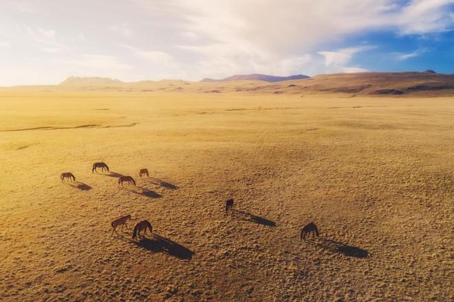 Bộ ảnh tuyệt vời của National Geographic: Khi thế giới hoang dã hóa mình thành kiệt tác - Ảnh 10.