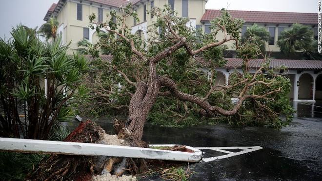 Siêu bão quái vật Irma tấn công dữ dội, Florida chới với trong biển nước - Ảnh 9.