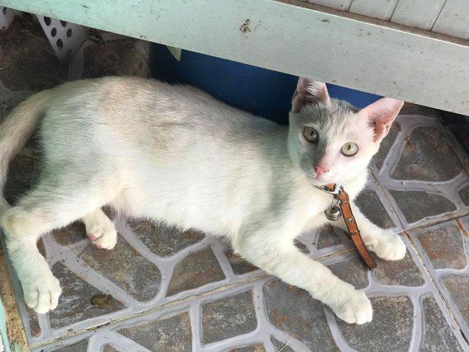 Chú mèo bị thương tật và đôi mắt gây ám ảnh nhiều người - Ảnh 2.