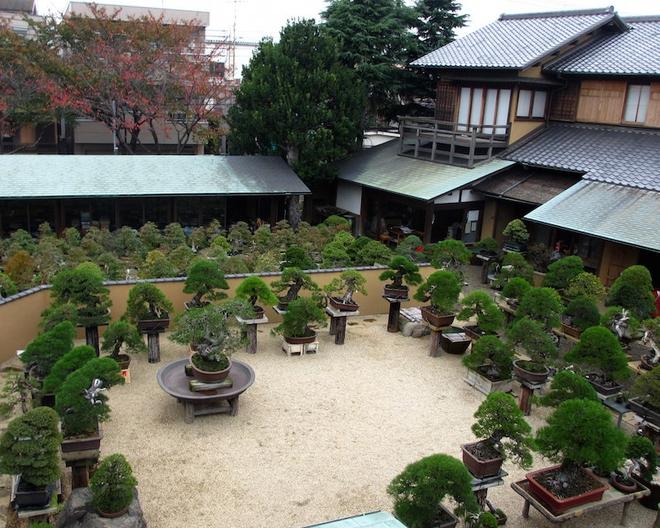 Bậc thầy bonsai Nhật và bí mật của vườn cảnh trăm tuổi được đại gia thế giới ước thèm - Ảnh 7.