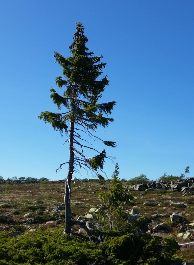 Bí mật của cây đàn 20 triệu USD: Chế tác bằng cây gỗ quý nghìn năm tuổi - Ảnh 4.