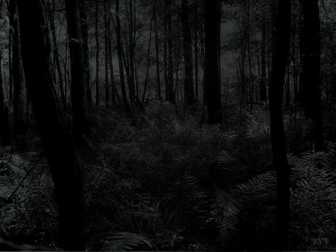 Nửa đêm vào rừng đo độ gan dạ, nhóm sinh viên trả một cái giá quá đắt! - Ảnh 2.