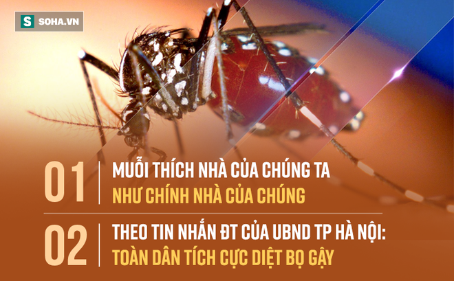 """""""Bắt thóp"""" tập tính muỗi truyền sốt xuất huyết: Lo trong nhà bạn, không cần lo hàng xóm!"""