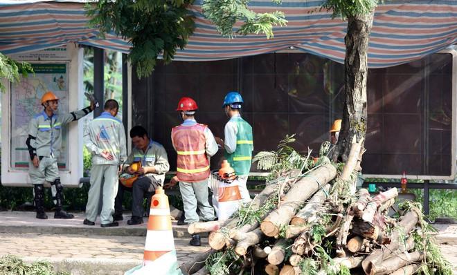 Hà Nội bắt đầu chặt hạ, di dời 130 cây xanh cổ thụ trên đường Kim Mã - Ảnh 1.
