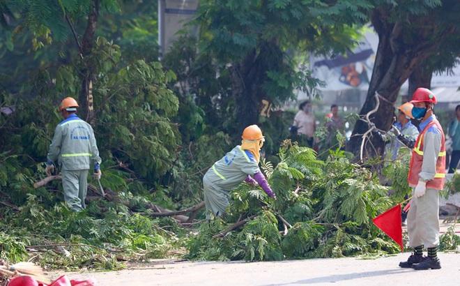 Hà Nội bắt đầu chặt hạ, di dời 130 cây xanh cổ thụ trên đường Kim Mã