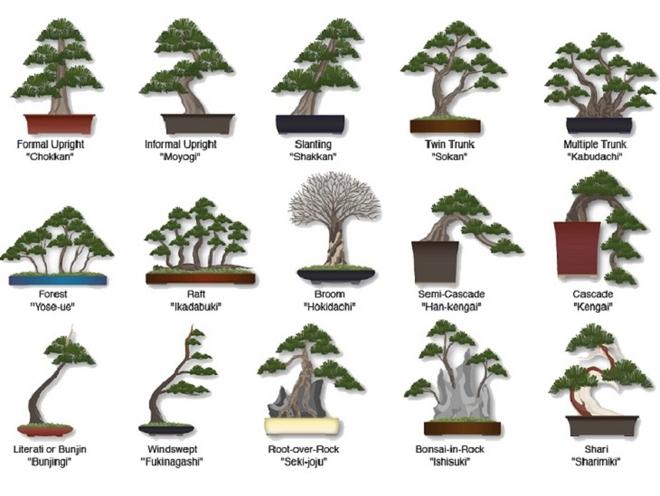 Bậc thầy bonsai Nhật và bí mật của vườn cảnh trăm tuổi được đại gia thế giới ước thèm - Ảnh 4.