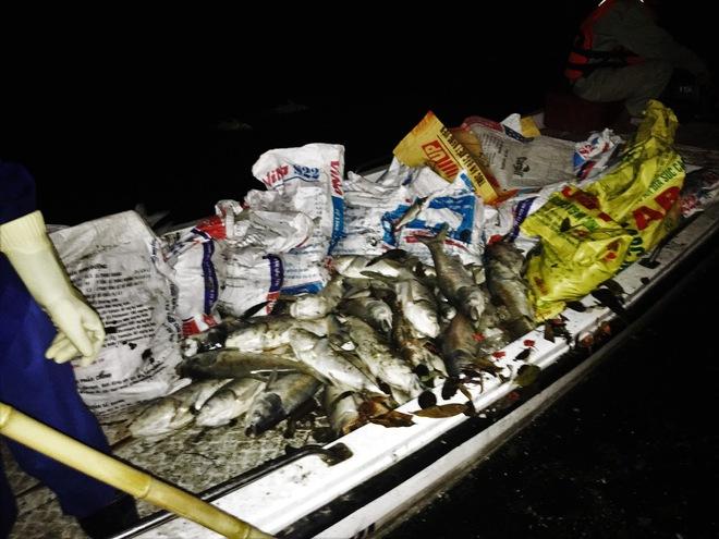 Trắng đêm thu dọn cá chết tại hồ Hoàng Cầu, Hà Nội - Ảnh 6.