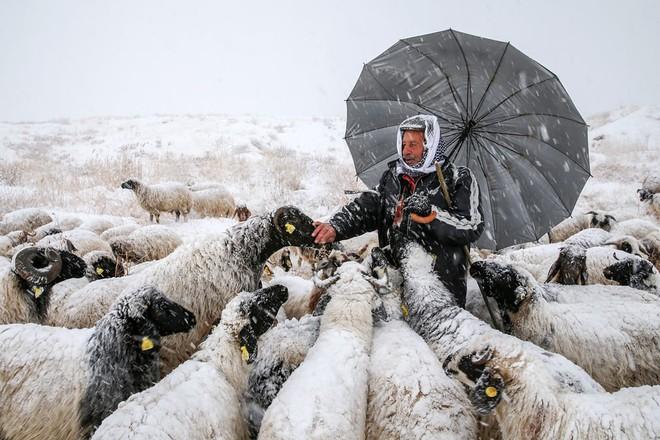 7 ngày qua ảnh: Xe đạp rác chất thành đống cao như núi ở Trung Quốc - Ảnh 10.