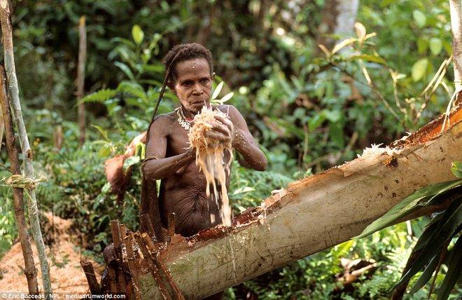 Cận cảnh bộ lạc sống trên cây, cao tới 50m và tách biệt với loài người ngay tại Đông Nam Á - Ảnh 2.