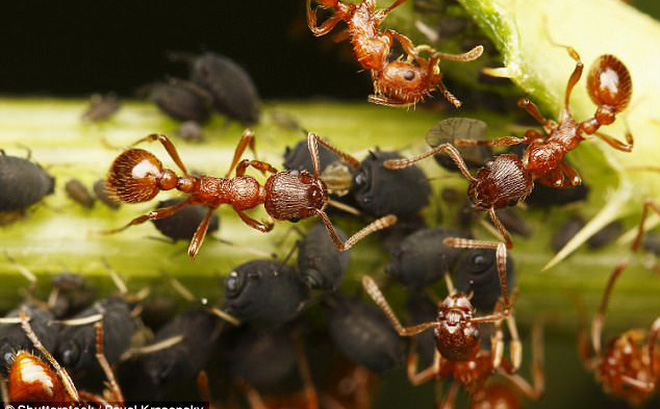 """4 điều thú vị về loài kiến, có thể """"dạy"""" cho con người những bài học giá trị"""