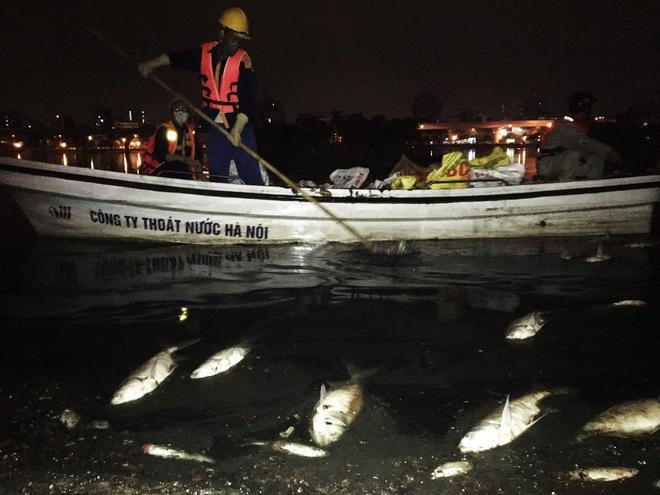 Trắng đêm thu dọn cá chết tại hồ Hoàng Cầu, Hà Nội - Ảnh 8.