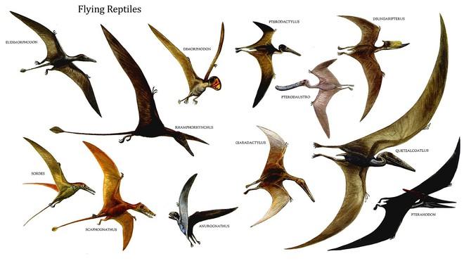 Chỉ to bằng con quạ nhưng loài khủng long này lại có tới 4 cái cánh - Ảnh 2.
