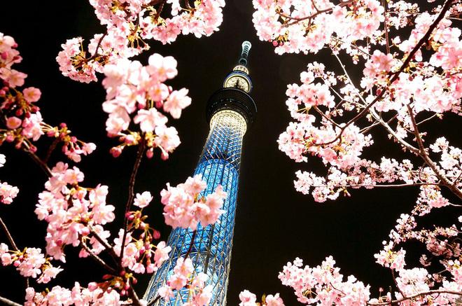 24h qua ảnh: Hoa anh đào nở rộ ở thủ đô Nhật Bản - Ảnh 5.