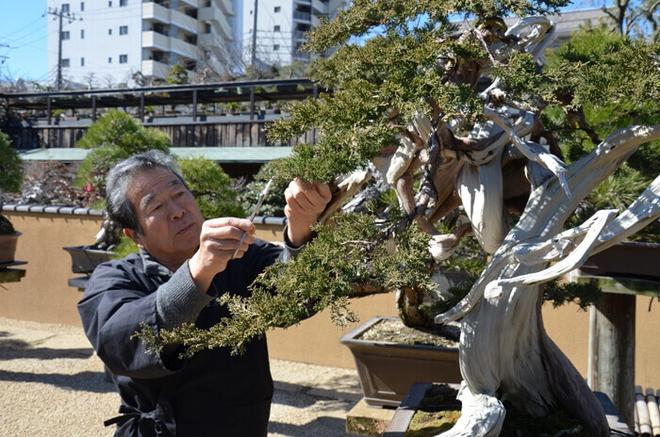 Bậc thầy bonsai Nhật và bí mật của vườn cảnh trăm tuổi được đại gia thế giới ước thèm - Ảnh 2.