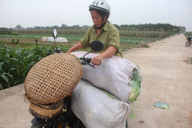 Rau sạch VietGap giá rẻ như cho, nông dân khóc ròng trên ruộng - Ảnh 7.
