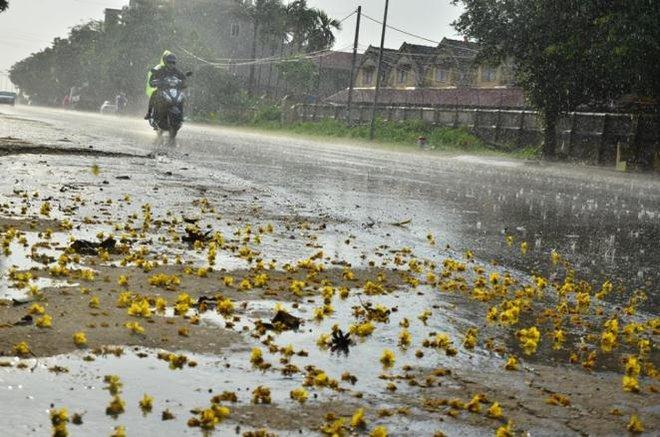 Cơn mưa vàng đã xuất hiện ở ngoại thành Hà Nội - Ảnh 3.