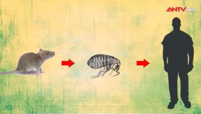Sự thật món đặc sản thịt chó, thịt mèo thơm phức được làm từ những con chuột cống béo múp - Ảnh 2.