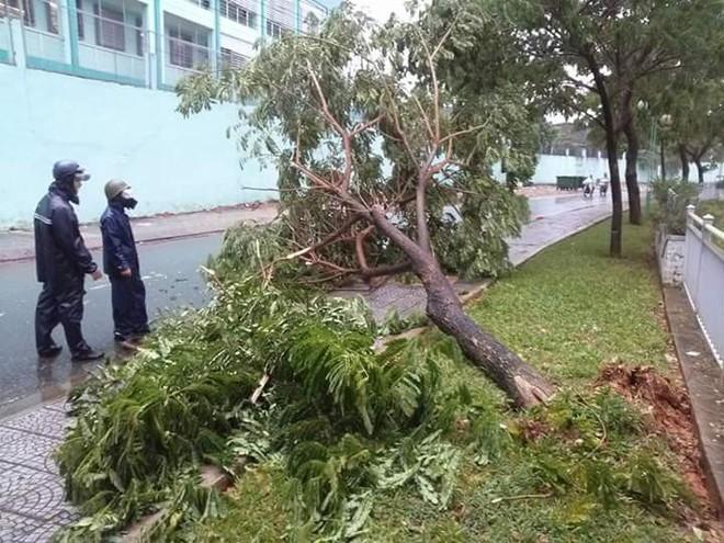 Chủ tịch Đà Nẵng kêu gọi khắc phục hậu quả mưa bão để đón tuần lễ Apec 2017 - Ảnh 1.