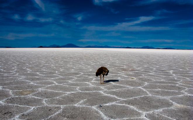 """Hé lộ nguyên nhân bí ẩn khiến bãi biển ở Uruguay, Brazil bỗng nhiên """"cạn ráo"""""""