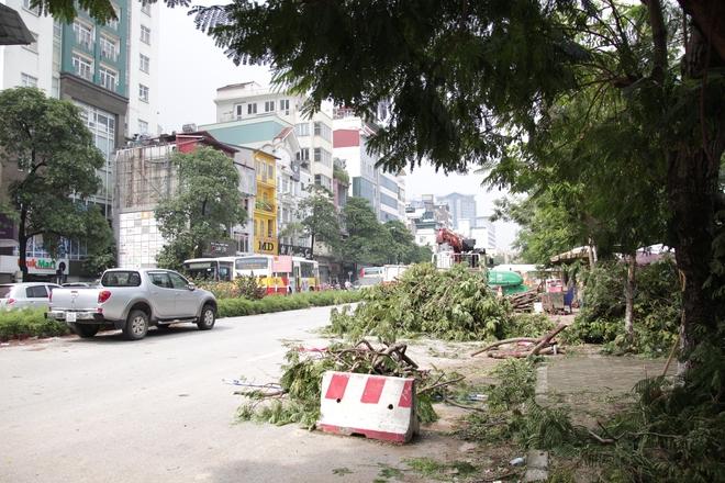 Hà Nội bắt đầu chặt hạ, di dời 130 cây xanh cổ thụ trên đường Kim Mã - Ảnh 8.