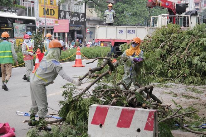 Hà Nội bắt đầu chặt hạ, di dời 130 cây xanh cổ thụ trên đường Kim Mã - Ảnh 7.