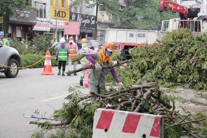 Hà Nội bắt đầu chặt hạ, di dời 130 cây xanh cổ thụ trên đường Kim Mã - Ảnh 6.