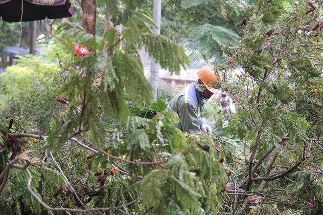 Hà Nội bắt đầu chặt hạ, di dời 130 cây xanh cổ thụ trên đường Kim Mã - Ảnh 10.