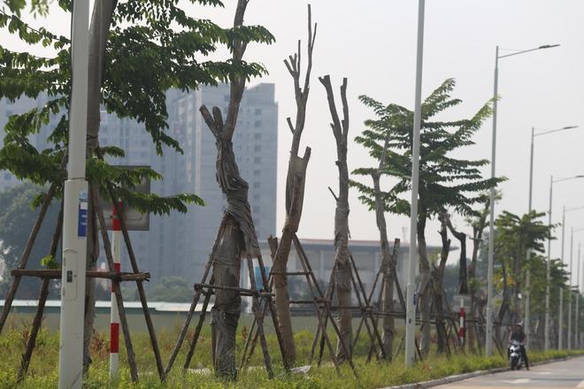Hàng loạt cây xanh tiếp tục chết sau khi trồng lại ở con đường nghìn tỉ - Ảnh 1.