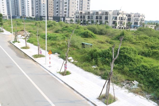 Hàng loạt cây xanh tiếp tục chết sau khi trồng lại ở con đường nghìn tỉ - Ảnh 4.
