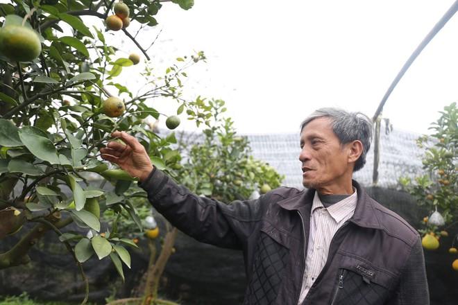 Lão nông thu về hàng trăm triệu nhờ ghép 10 loại quả trên cùng một cây cảnh ở Hà Nội - Ảnh 6.