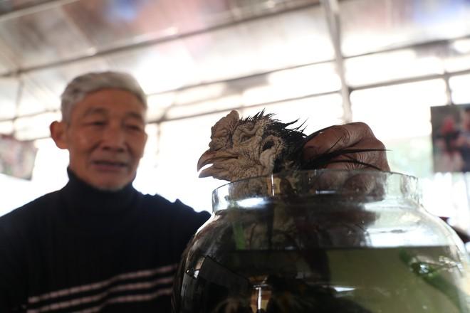 Lão nông ngâm rượu gà Đông Tảo, khách trả 150 triệu nhưng ông nhất quyết không bán - Ảnh 7.