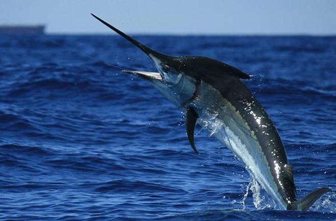 95% đại dương là ẩn số với nhân loại: Đây là những kỷ lục mà con người xác định được - Ảnh 8.