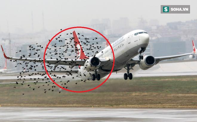 Đừng tưởng bạn đã biết: Một con chim nhỏ cũng khiến hàng không Mỹ mất 1,2 tỷ USD - vì sao?