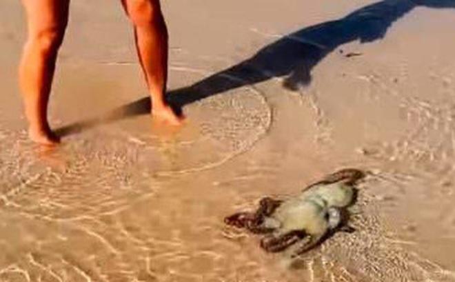 Gia đình cứu 1 con bạch tuộc, điều bất ngờ xảy ra vào hôm sau làm họ nhớ cả đời
