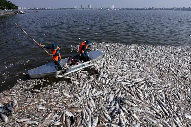 Chuyên gia thực phẩm: Nếu gặp 7 loại cá này, bạn tuyệt đối không nên mua về ăn - Ảnh 3.