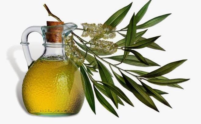 Tinh dầu bạch đàn: Món quà thiên nhiên có 8 công dụng đáng kinh ngạc