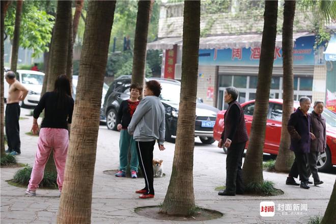 Chữa bệnh bằng cây xanh: Một trào lưu dưỡng sinh mới đang nở rộ ở Trung Quốc - Ảnh 4.