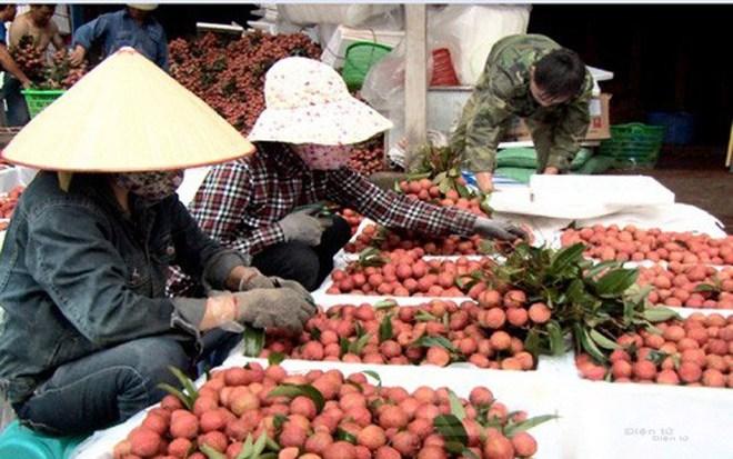 Trung Quốc sẽ mua 40.000 tấn vải Bắc Giang - Ảnh 1.