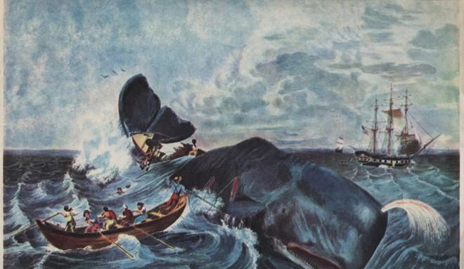 Moby - Huyền thoại về cá voi trắng và cuộc trả thù tàn khốc đối với con người - Ảnh 6.